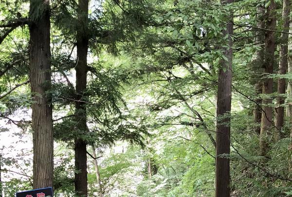吹割の滝の写真・動画_image_375239