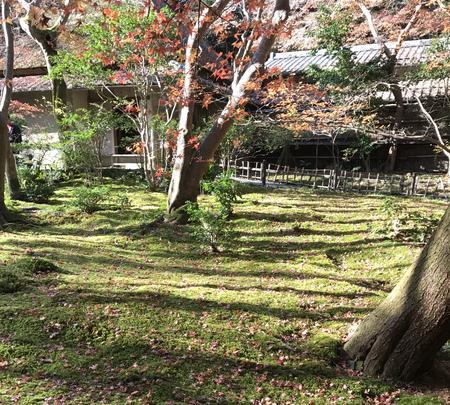 祇王寺の写真・動画_image_375852
