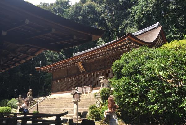 宇治上神社の写真・動画_image_375936