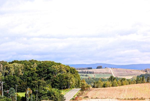 丘のさんぽ道「ジェラート工房 丘のミルジェ」の写真・動画_image_385840
