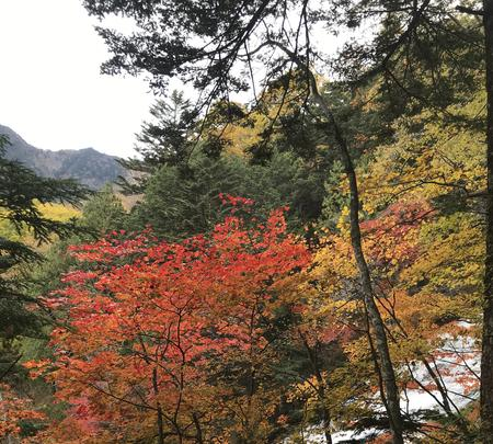湯滝の写真・動画_image_389844