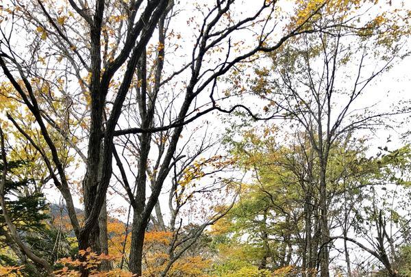湯滝の写真・動画_image_389847