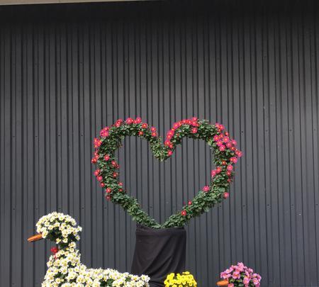 神奈川県立花と緑のふれあいセンター 花菜ガーデンの写真・動画_image_391868