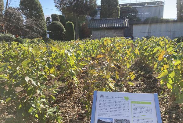 富岡製糸場の写真・動画_image_400348