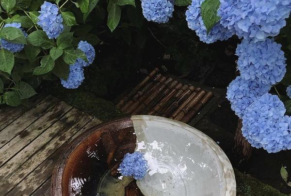 明月院(あじさい寺)の写真・動画_image_416889