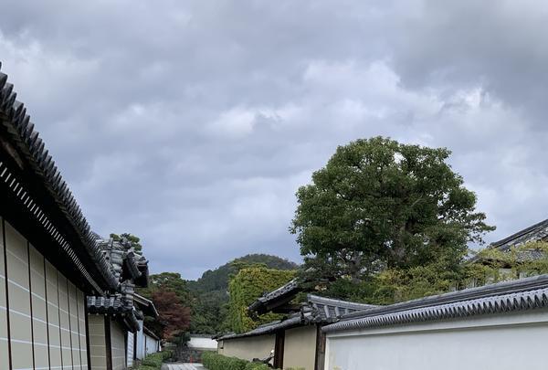 妙心寺の写真・動画_image_419124