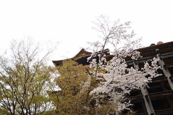 清水寺の写真・動画_image_422264