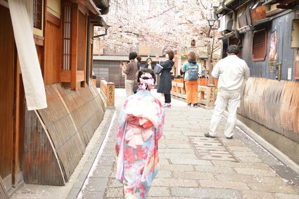 祇園白川の写真・動画_image_423314