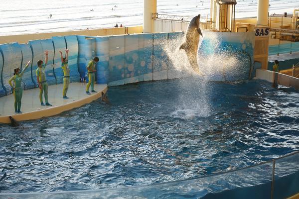 新江ノ島水族館の写真・動画_image_429446