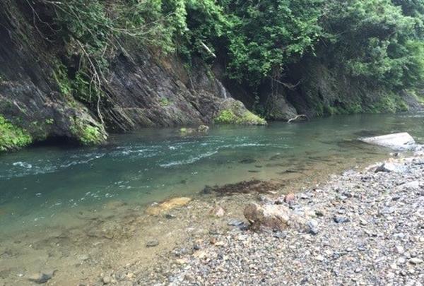 清流「安曇川(あどがわ)」