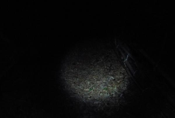 シガイの森の写真・動画_image_87310