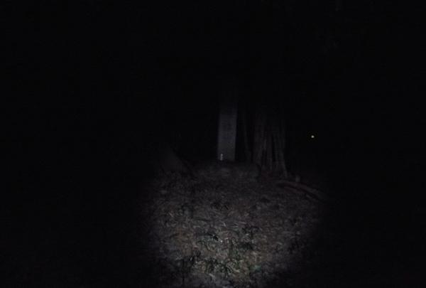 シガイの森の写真・動画_image_87311