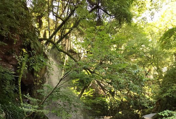 万葉公園の写真・動画_image_93281