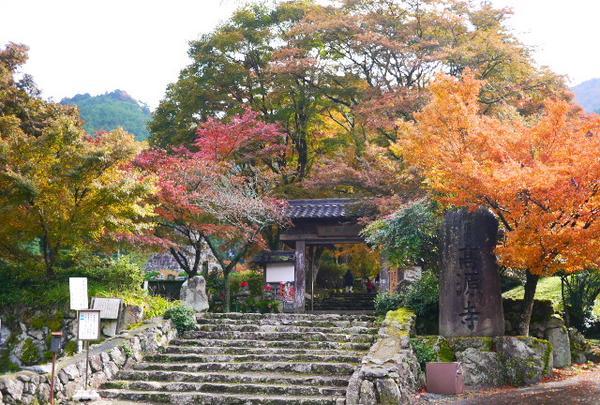 高源寺の写真・動画_image_205500