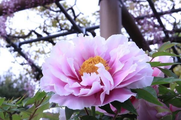 曼陀羅寺の写真・動画_image_234039