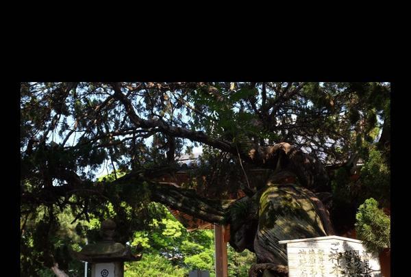 高砂神社の写真・動画_image_244133