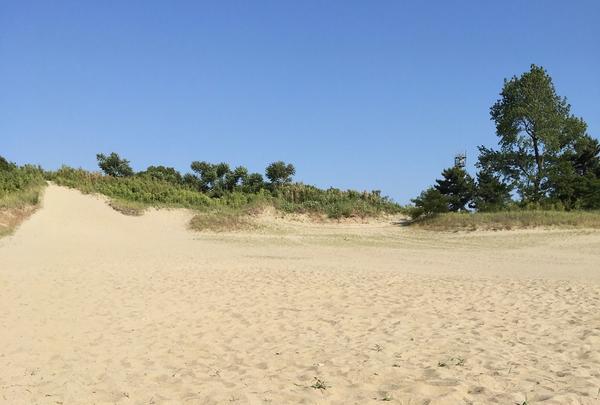 国営木曽三川公園ワイルドネイチャープラザの写真・動画_image_246294