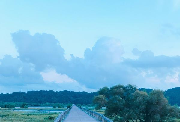 蓬莱橋の写真・動画_image_265159
