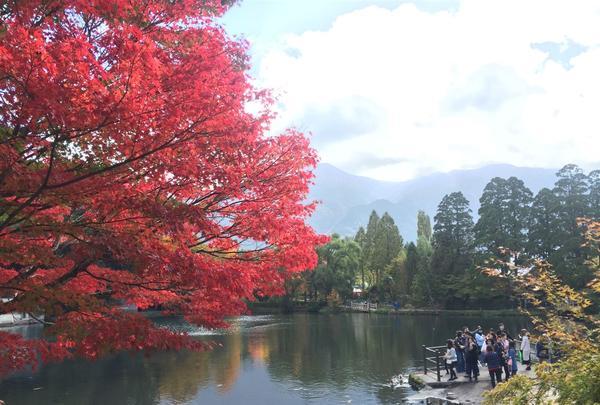 金鱗湖の写真・動画_image_277269