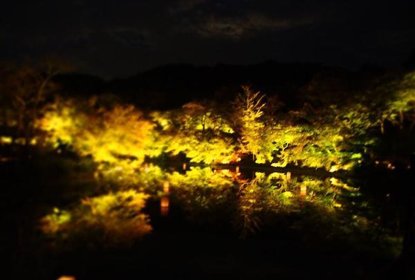 御船山楽園の写真・動画_image_284728