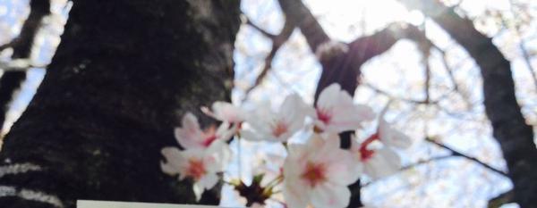 高知市の写真・動画_image_302396
