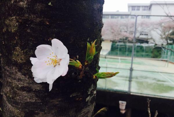 高知市の写真・動画_image_302399