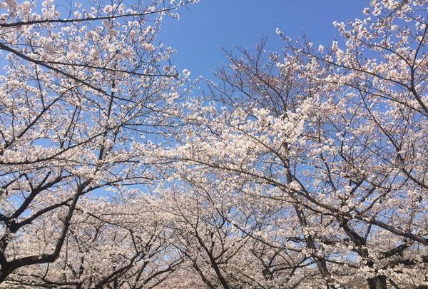 大井ふ頭海浜公園の写真・動画_image_307151