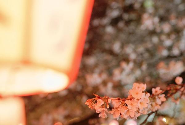 目黒川の写真・動画_image_307250