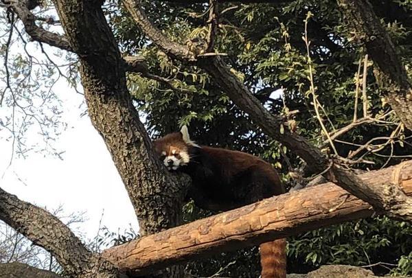 野毛山動物園の写真・動画_image_308065