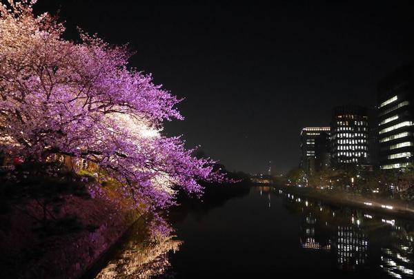 舞鶴公園の写真・動画_image_320368