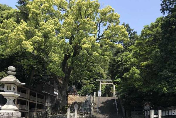 多度大社(北伊勢大神宮)の写真・動画_image_324433