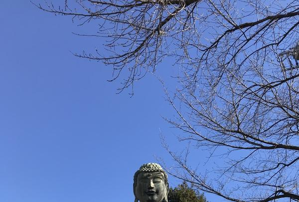 護国寺の写真・動画_image_339428