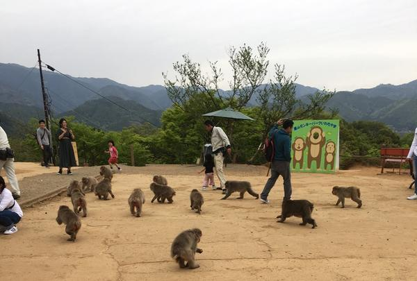 嵐山モンキーパークいわたやまの写真・動画_image_348006