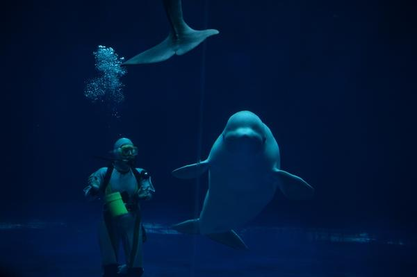 しまね海洋館アクアスの写真・動画_image_416388