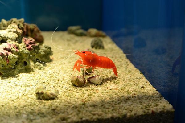 しまね海洋館アクアスの写真・動画_image_416390