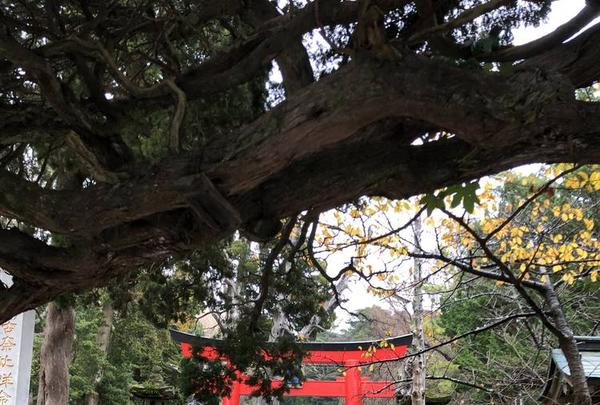 白浜神社の写真・動画_image_475724