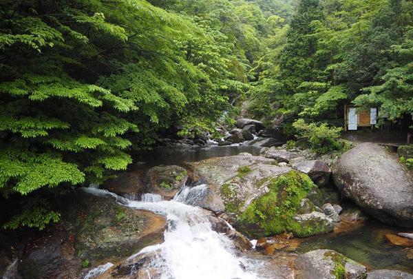 白谷雲水峡の写真・動画_image_486493