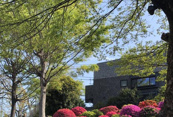 根津神社の写真・動画_image_554014