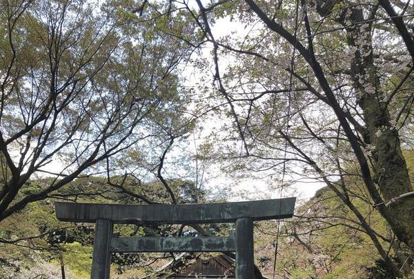金崎宮の写真・動画_image_554187
