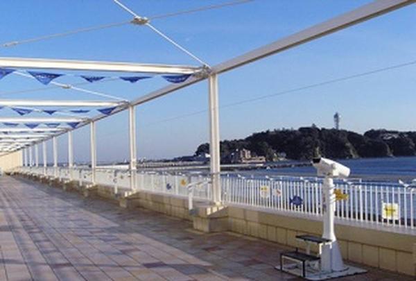 新江ノ島水族館の写真・動画_image_569321