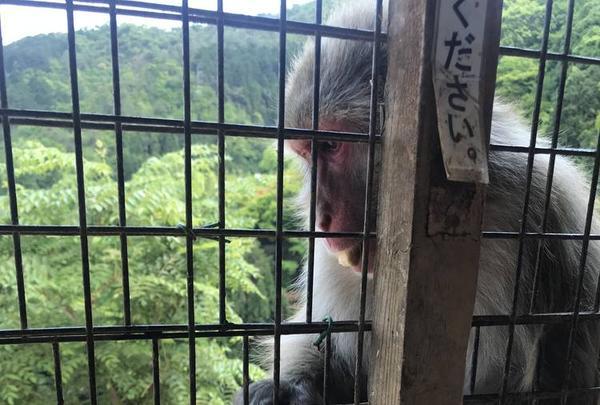 嵐山モンキーパークいわたやまの写真・動画_image_569879