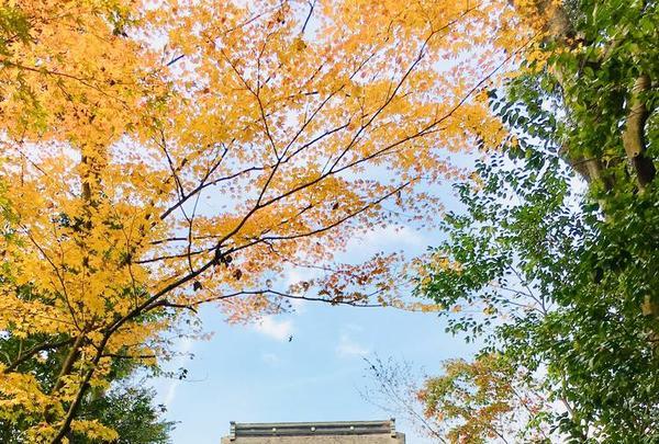 薦神社の写真・動画_image_570014