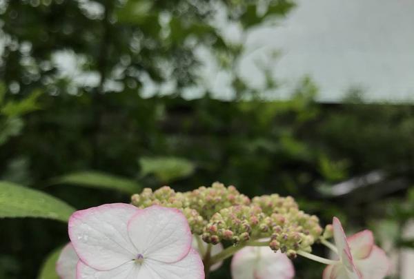 浄妙寺の写真・動画_image_581816