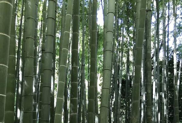 鎌倉の写真・動画_image_655118