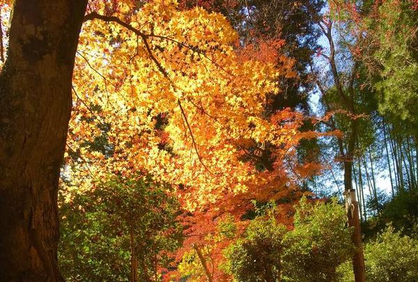 吉野山の写真・動画_image_664356