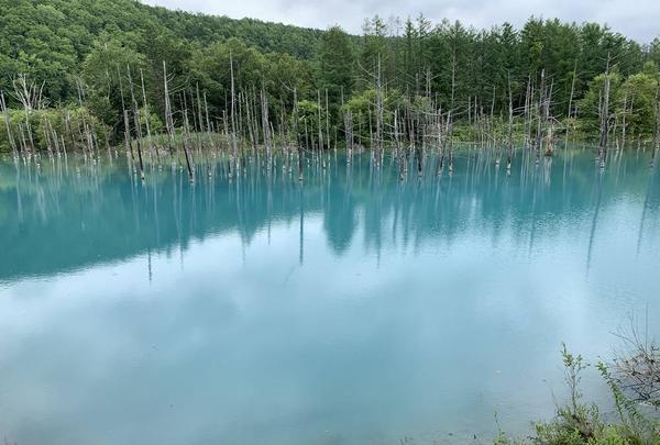 青い池の写真・動画_image_671234