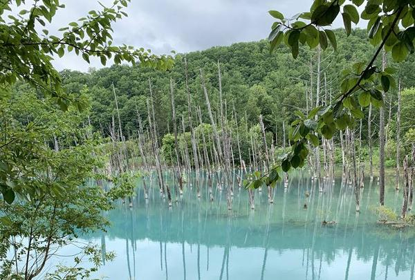 青い池の写真・動画_image_671237