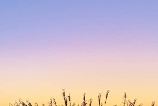 曽爾高原の写真・動画_image_680004