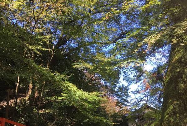 鞍馬寺の写真・動画_image_680572