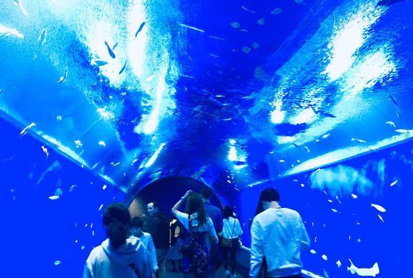 海遊館の写真・動画_image_683600